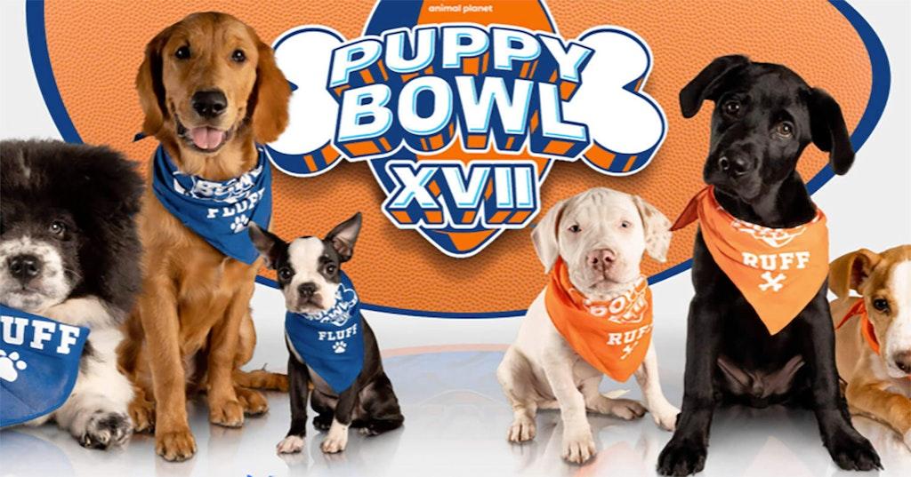 qanon puppy bowl