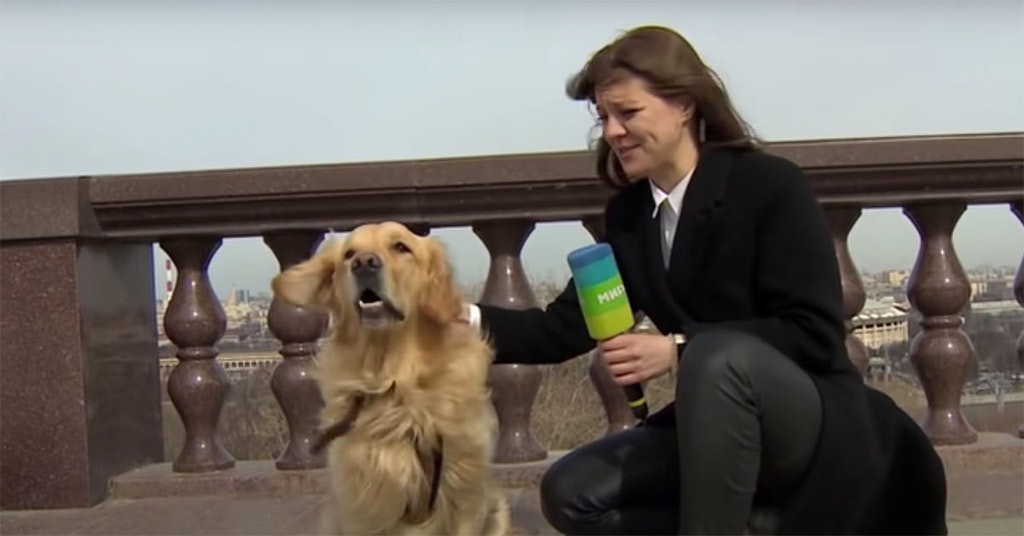 dog steals reporter's microphone